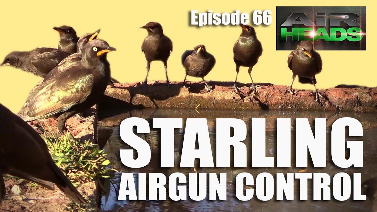 Starling Airgun Control – Airheads, épisode 66