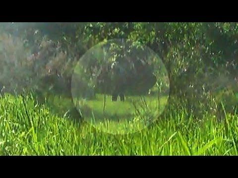 Airsoft Sniper Chasse | 2/2 le 26/05/13 | Match de terrain