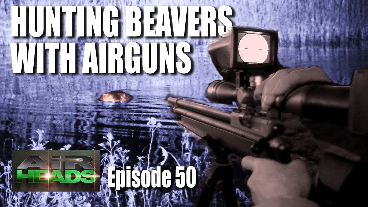 Hunting Beavers with Airguns – AirHeads, épisode 50