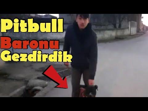 Pitbull Baronu Gezdirdik (Personnel)