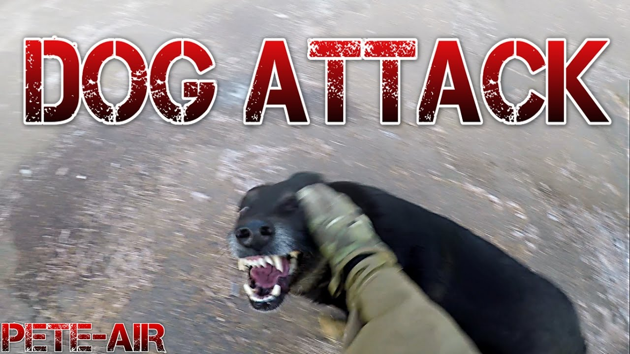 Airsoft CZ – Dog Attack [CZ + ENG SUBTITLES]